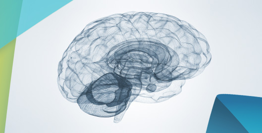 Feel-Brain-Fit-Image-Post