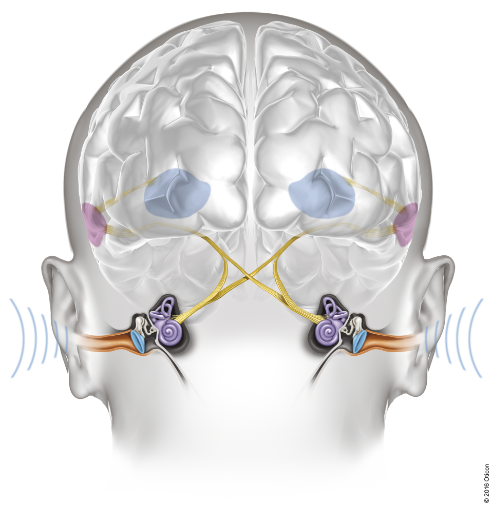 Oticon_Velox_Ears_Brain_BrainHearing_Illustration_Light_Width300mm_300dpi_(C)_2016_Oticon