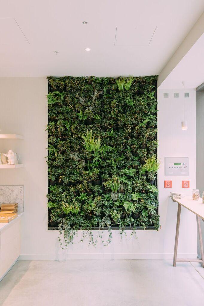 living wall the detox kitchen