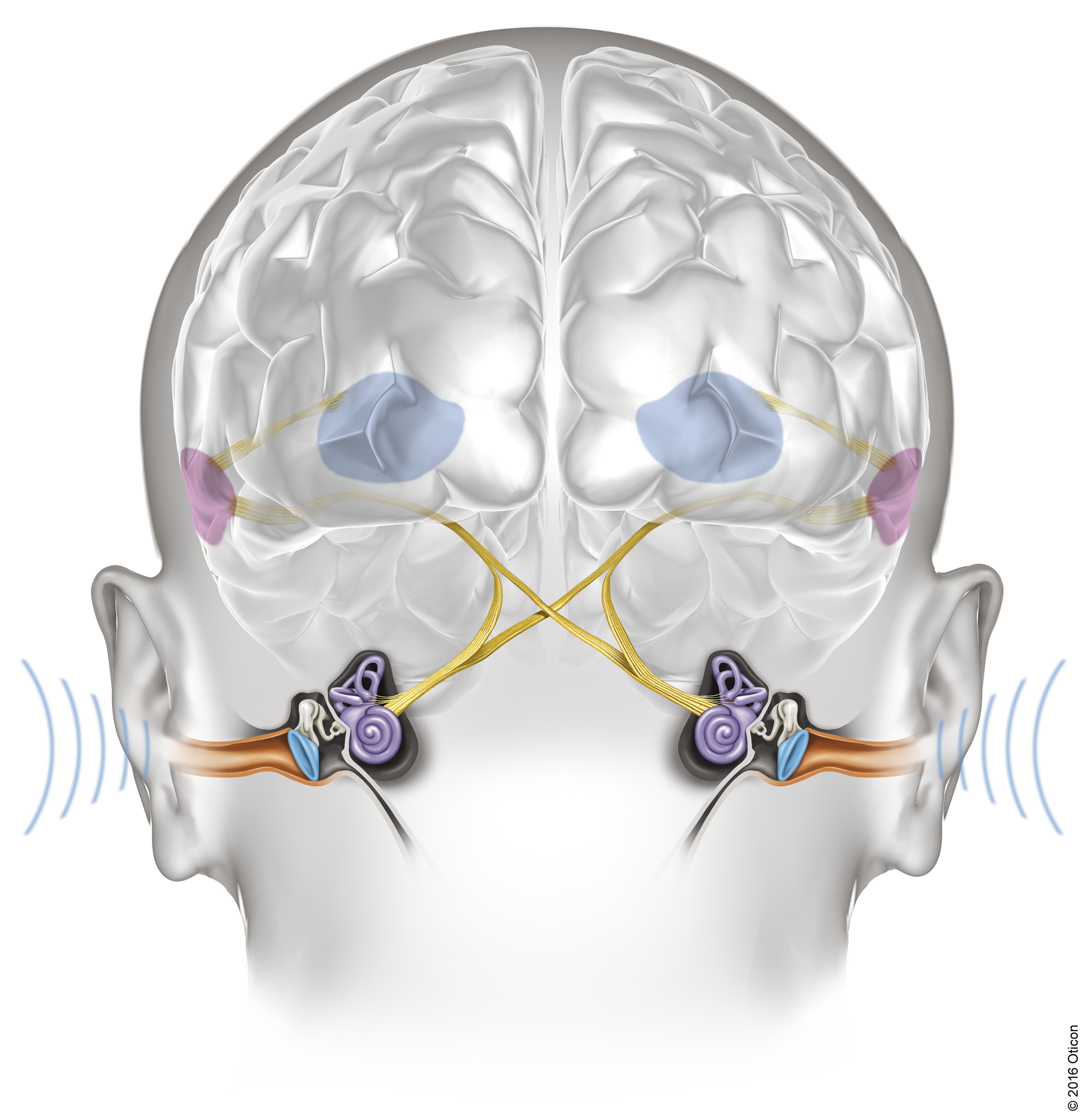Velox ears audiology